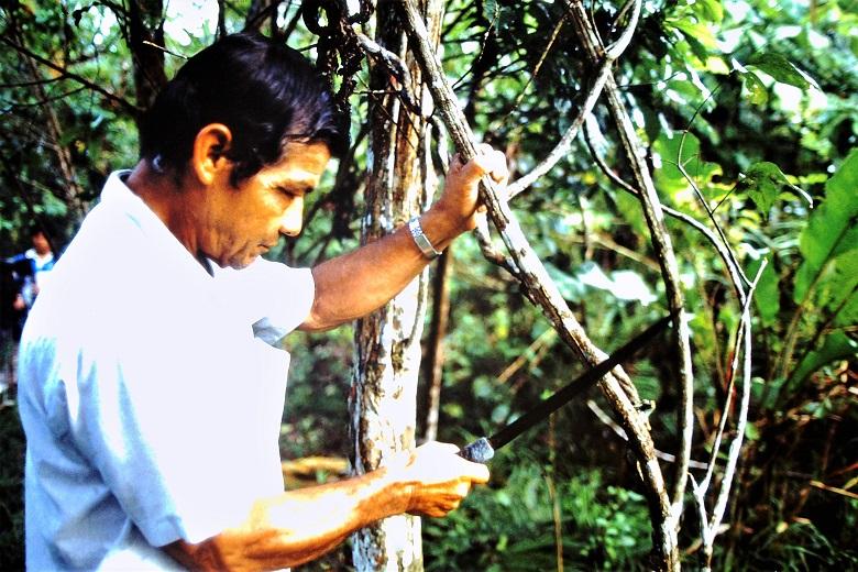 Ayahuasca La Medicina
